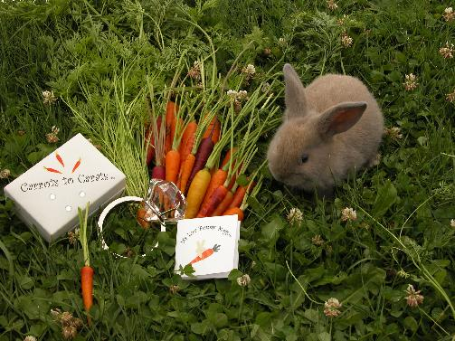 Promise Rings carrots to carats  It's Luv Bunny Magic